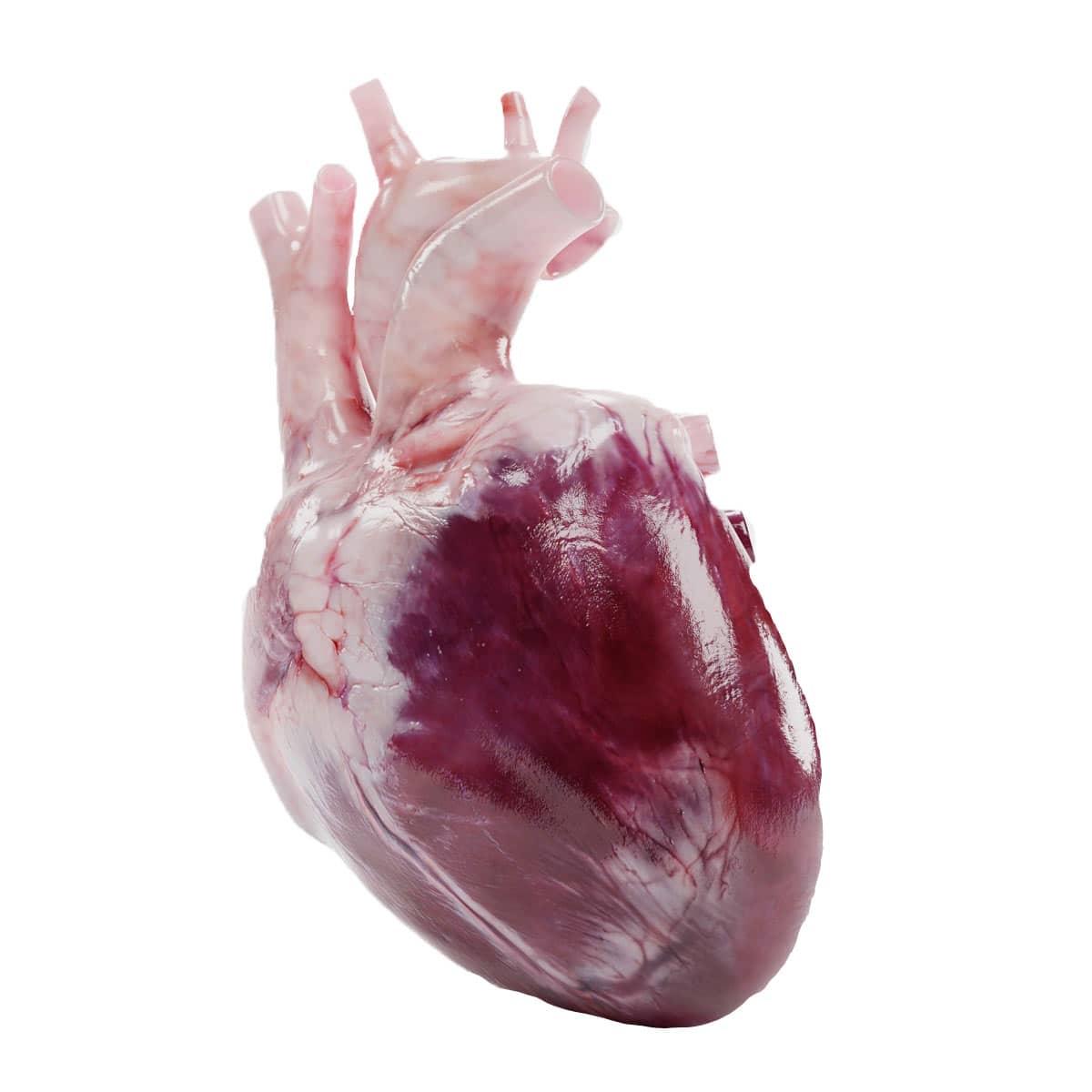 Medizinische 3D Animation Herz